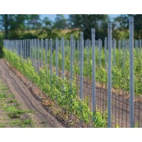 Stup za vinograd 200 cm